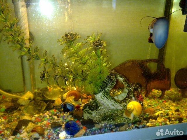 аквариум для водных улиток герой Андрей Соколов