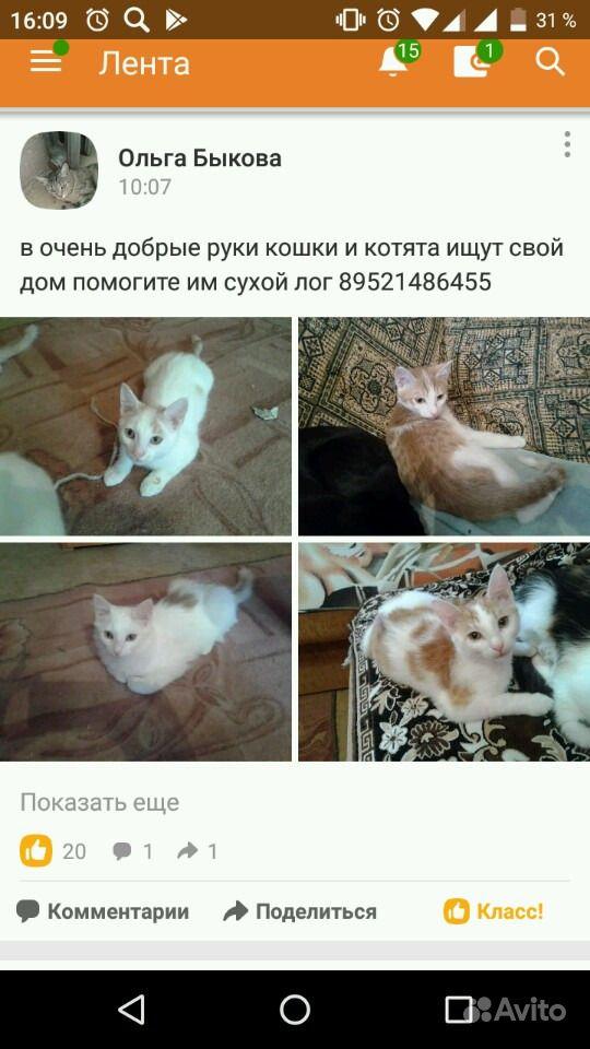 Котята, кошки и коты в добрые руки