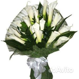 Каллы цветущие, саженцы купить на Зозу.ру - фотография № 4