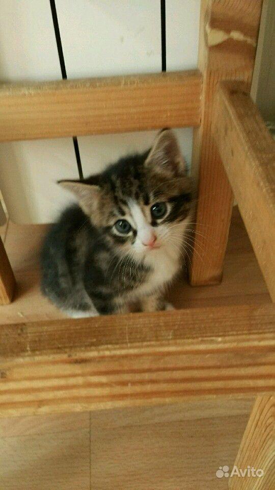 Отдам котят в хорошие руки в Санкт-Петербурге - фотография № 1