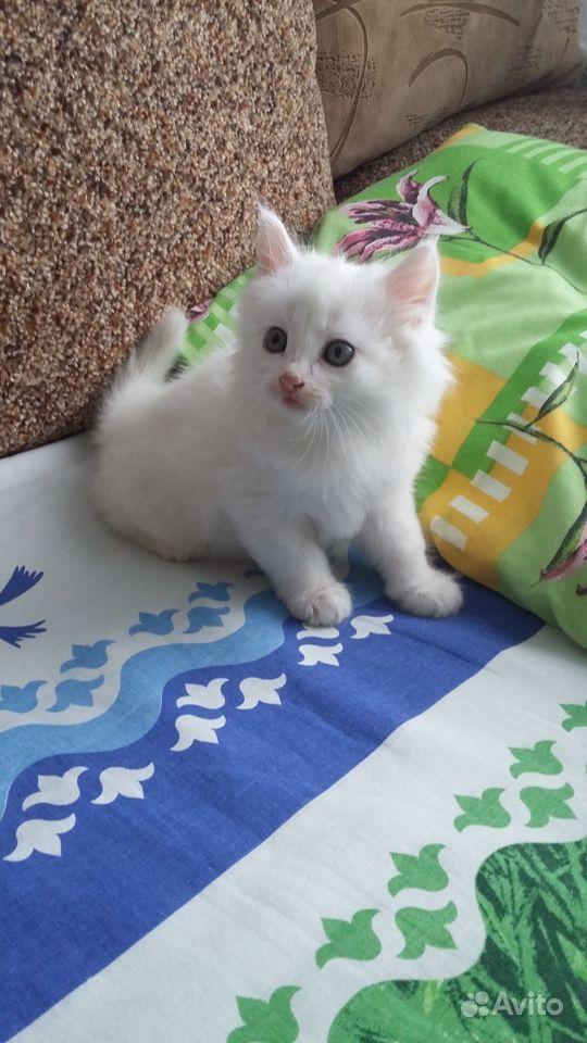 Отдам котенка в хорошие руки в Грязях - фотография № 1
