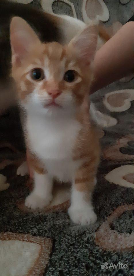 Отдаются два котёнка (чертёнка)