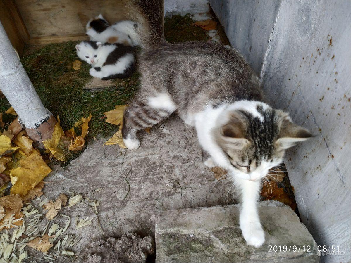 Помогите пристроить котят и их маму