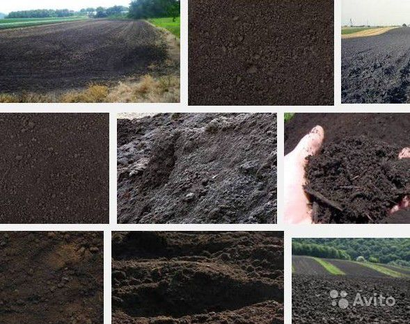 Чернозём для сада и огорода купить на Зозу.ру - фотография № 1