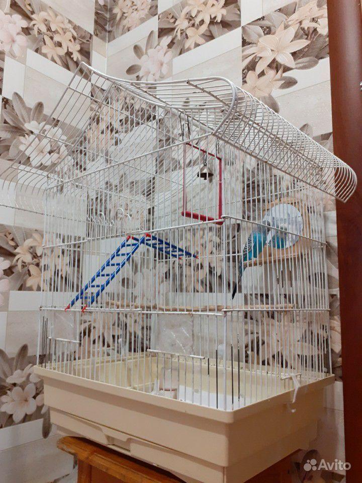Попугай купить на Зозу.ру - фотография № 3