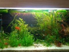 Аквариумные растения, эндлер, живой корм гриндаль