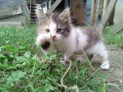 Котенок 1.5 месяца