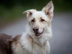 Герда - самая милая собака в самые добрые ручки