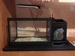 Аквариум органайзер в офис