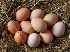 Яйцо цесарки инкубационное