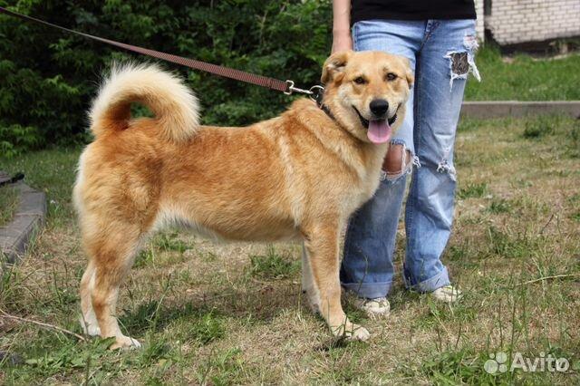 Булка - невозможно плюшевая собака) купить на Зозу.ру - фотография № 3