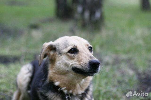 Улыбчивая собака Шелли в добрые руки купить на Зозу.ру - фотография № 8