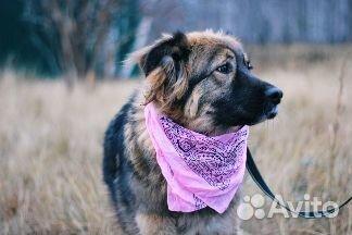 Пушистая собака в дар купить на Зозу.ру - фотография № 6