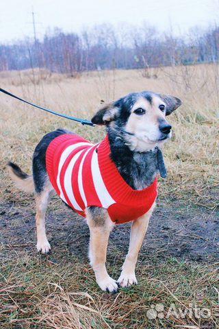 Собака ниже колена в дар купить на Зозу.ру - фотография № 1
