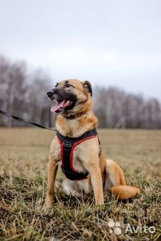 Собака в дар купить на Зозу.ру - фотография № 1