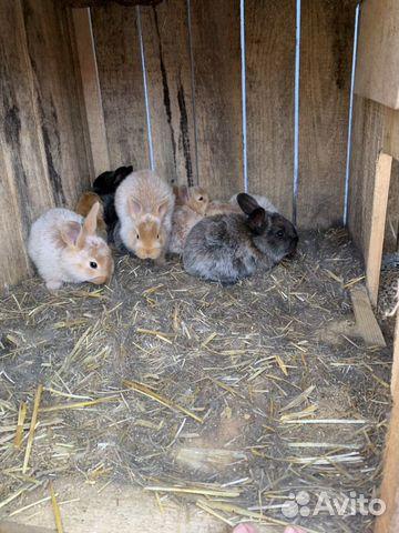 Кролики 89611918195 купить 4