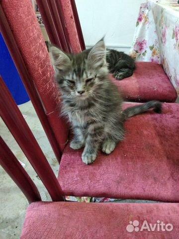 Котята даром 89197391040 купить 2