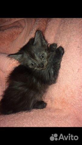 Котята в добрые руки  89000273244 купить 3