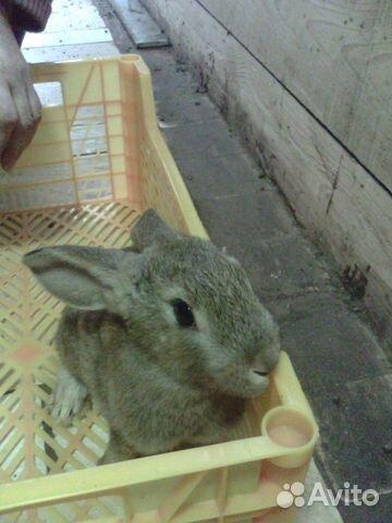 Крольчата  89159619381 купить 3