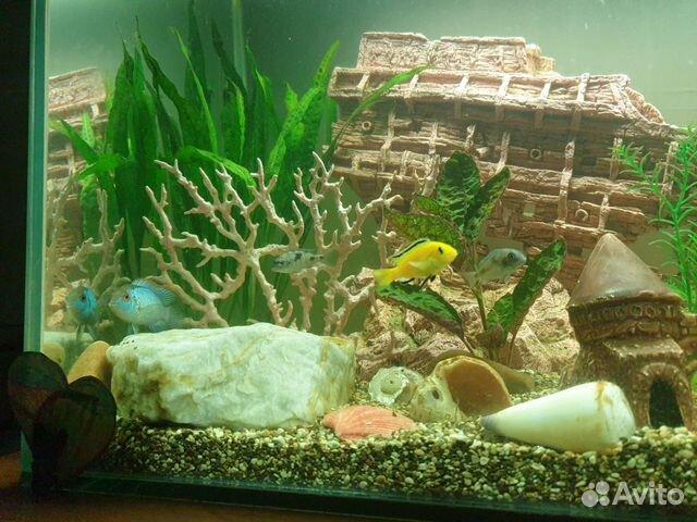 Аквариум с рыбками и декорациями  89196043887 купить 3