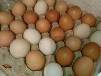 Деревенские куриные яйца