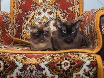 Ваня и Лиза ищут дом