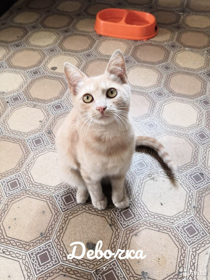 Котики ищут добрые руки  89102186335 купить 8