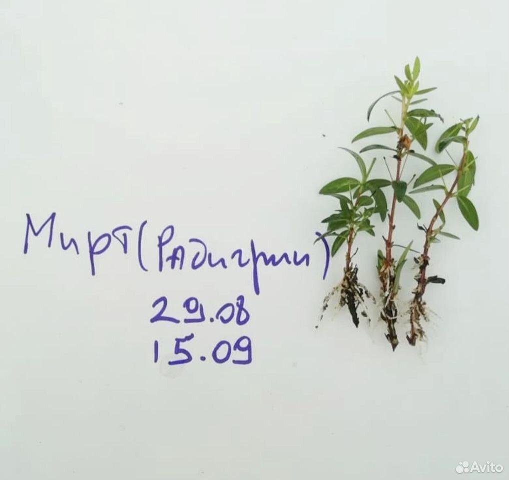 Радигрин для черенкования растений  89029239959 купить 5