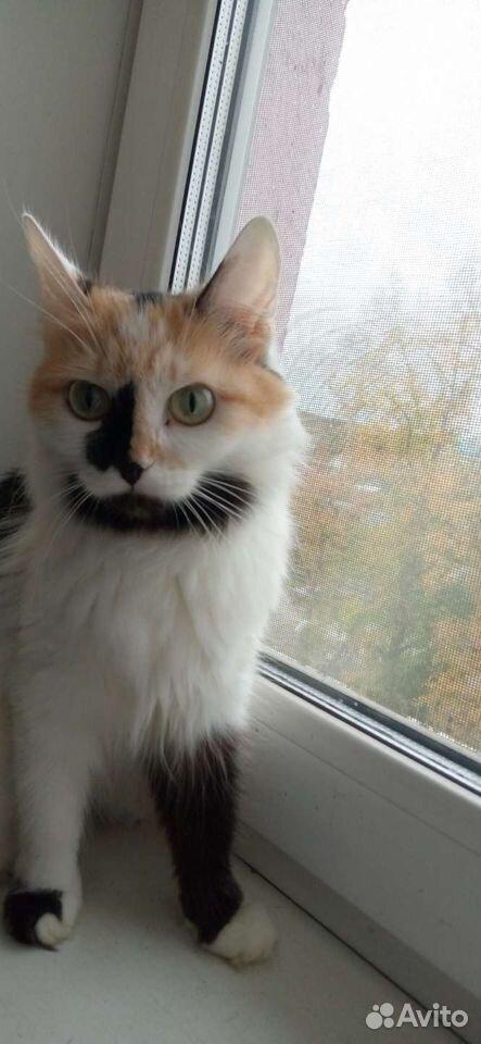 Кошка  89059831610 купить 6