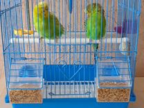 Клетка с папугаями