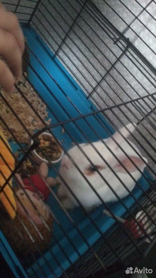 Кролик  89991156657 купить 3