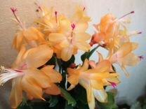 Комнатные цветы для дома и офиса