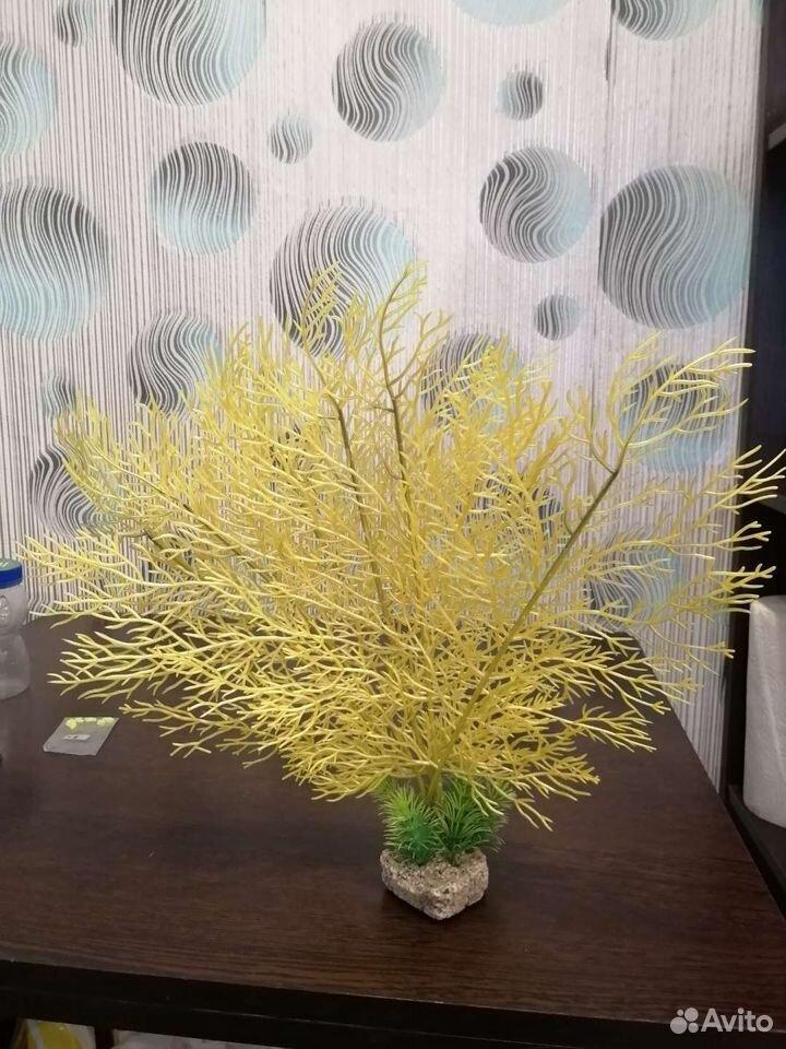 Decoration in aquarium  89234668681 buy 1