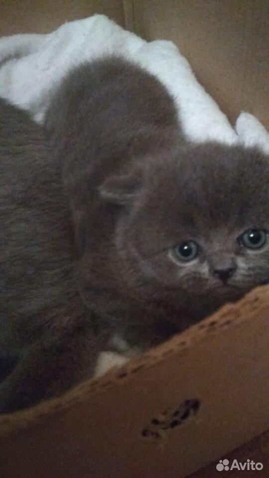 Кошки  89136104151 купить 5
