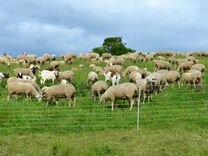 Электропастух электроизгородь для овец мощный