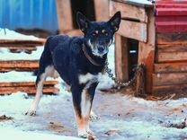 Собаки на охрану и в дом