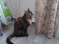 Кошка, богатка