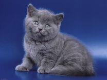 Отдаем маленьких котят