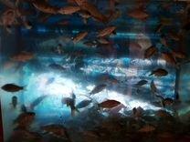 Живец, карасик для рыбалки или просто в аквариум